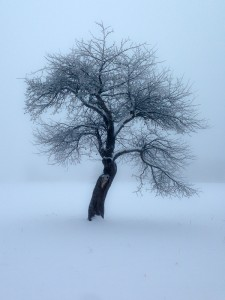 Photo of lone tree in snowy, misty landscape