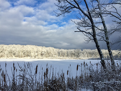 Photo looking across Dean Pond at the forest lit by sunlight and transformed by a fresh snowfall.
