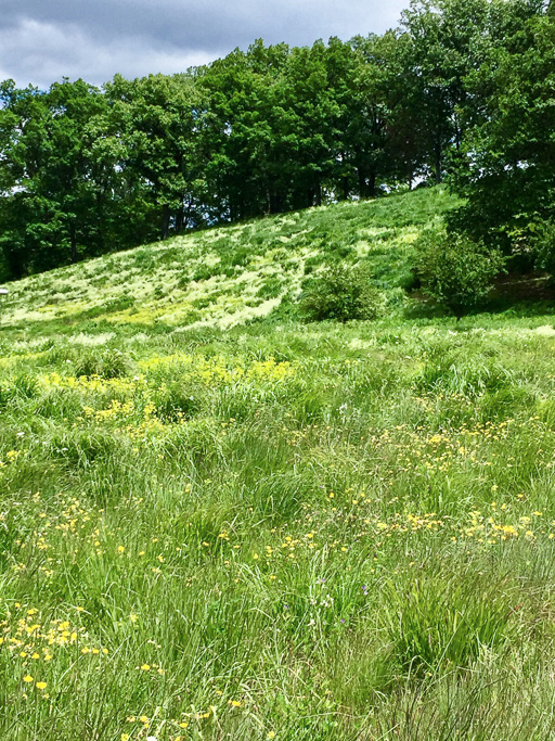 Photo of a meadow in summer with many wildflowers