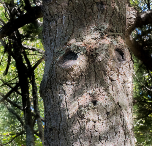 Photo of a tree trunk that looks like a face saying 'Whooooo!'